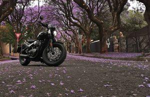 Triumph Bonneville and jacaranda trees